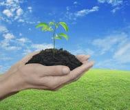 Hände, die ein frisches Pflänzchen mit Boden über Esprit des grünen Grases halten Stockfoto