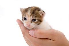 Hände, die ein Kätzchen anhalten stockfoto