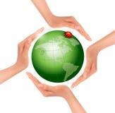 Hände, die eine grüne Erde mit einem Marienkäfer halten. Stockbild