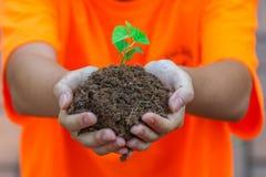 Hände, die eine neue Jungpflanze übergibt Ihnen halten Stockbild