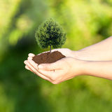 Hände, die einen Baum anhalten Lizenzfreies Stockbild