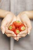 Hände, die Erdbeeren anhalten Stockbilder