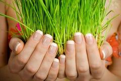Hände, die grünes Gras anhalten Lizenzfreie Stockbilder