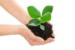 Hände, die Grünpflanzeökologiekonzept halten Lizenzfreies Stockfoto