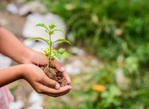 Hände, die Grünpflanze halten lizenzfreies stockfoto