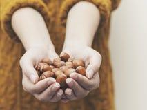 Hände, die Haselnüsse halten Stockfoto