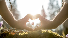 Hände, die Herz-Form um kleine Blume bilden Lizenzfreie Stockfotos