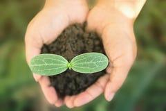 Hände, die junge Gemüseanlagen halten Lizenzfreie Stockfotos