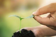 Hände, die junge Gemüseanlagen halten Stockbilder