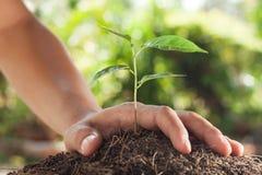 Hände, die Jungpflanze halten und sich interessieren Stockfoto