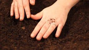 Hände, die Kürbissamennahaufnahme pflanzen stock footage