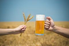 Hände, die mit Becher Bier und Weizenähren auf Erntefeld cheersing sind Stockfotografie