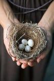 Hände, die Nest mit Eiern anhalten Lizenzfreies Stockbild