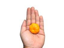 Hände, die orange Frucht auf weißem Hintergrund halten Stockfotografie
