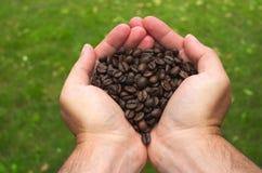 Hände, die Röstkaffeebohnen halten Stockbilder