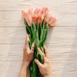 Hände, die rosa Tulpen im weichen Licht des Morgens auf weißem rustikalem halten Stockfotos