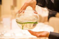 Hände, die Schüssel mit Wasser halten Stockbild