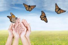 Hände, die Schmetterlinge auf Wiese freigeben Lizenzfreie Stockfotos