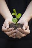 Hände, die seedleng halten Lizenzfreies Stockbild
