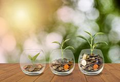 Hände, die Stapel der Münzen schützen Münzen im Glasglas Investitionsgeld conce Stockfoto