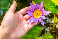 Hände, die waterlily Lotosblume gegen Blätter halten stockfotos
