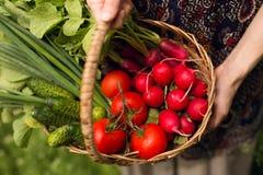 Hände eines Frauenlandwirts Ein Landwirt hält einen Korb mit Gemüse auf seinen ausgestreckten Händen stockbild