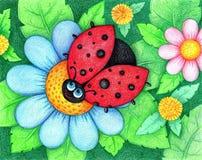 Hände gezeichnetes Bild des Marienkäfers sitzt auf Blume durch die Farbbleistifte Lizenzfreie Stockfotos