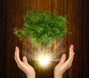 Hände halten magischen grünen Baum und Strahlen des Lichtes Lizenzfreie Stockfotos