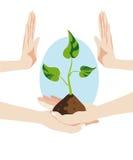 Hände halten und konservieren eine Handvoll Boden, von der das Ne wuchs Stockbilder