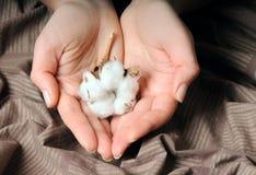 Hände mit Baumwolle Stockbild