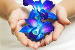Hände mit Blume Lizenzfreie Stockbilder