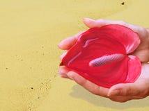 Hände mit Blume u. Wasser des Lebens in der Wüste Lizenzfreie Stockbilder