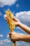 Hände mit dem Ohr des Weizens Lizenzfreie Stockfotografie