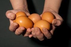 Hände mit Eiern Lizenzfreie Stockbilder
