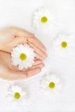 Hände mit einer weißen Chrysantheme lizenzfreie stockfotos