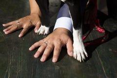 Hände mit Hochzeitsringen stockfoto