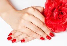 Hände mit roter Blume Lizenzfreie Stockfotografie