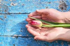 Hände mit Tulpen Lizenzfreie Stockfotos