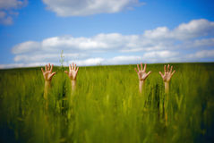 Hände oben Lizenzfreies Stockfoto
