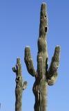 Hände oben! Lizenzfreie Stockfotografie