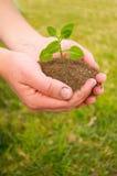 Hände pflanzen Seitenteil I Lizenzfreies Stockfoto