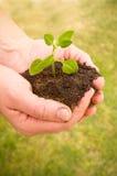 Hände pflanzen Seitenteil II Stockbild