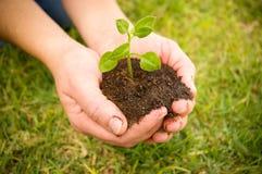 Hände pflanzen Seitenteil III Stockfotografie