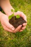 Hände pflanzen Seitenteil IV Stockfotografie