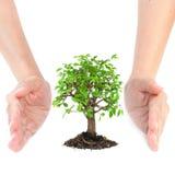 Hände um kleinen Baum Stockfotografie