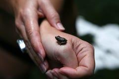 Hände und Frosch Stockbilder