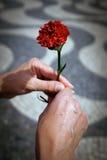 Hände und Gartennelke lizenzfreies stockfoto
