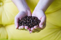 Hände voll von Kaffeebohnen stockfoto
