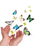 Hände, welche die buterflies freigeben Stockfotografie