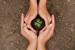 Händer är skyddar ett litet träd, eller växten växer på jord arkivfoto